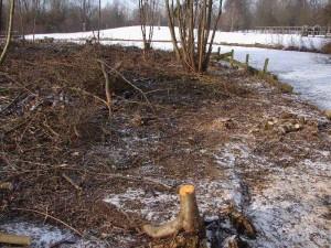 boomstronk verwijderen in winter, stronkenfrees, bomen kappen