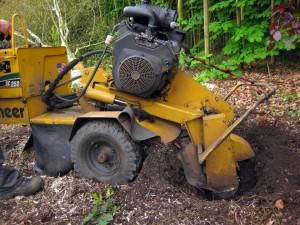 boomstronken verwijderen